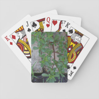 Stone and Plants Playing Cards