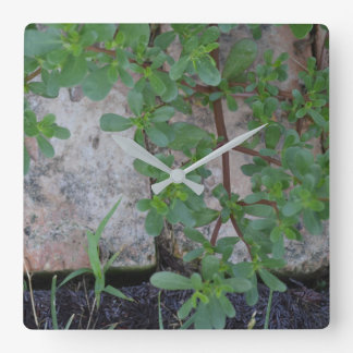 Stone and Plants Square Wall Clock
