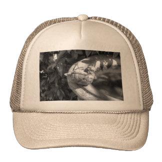Stone Bird Fountain Mesh Hats