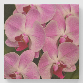 Stone Coaster - Orchid