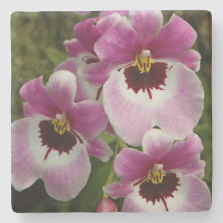 Stone Coaster - Pansy Orchid