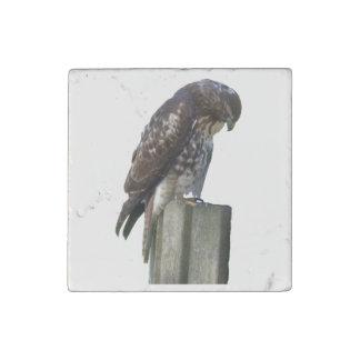 Stone Magnet - Falcon