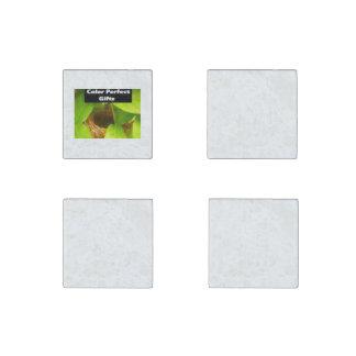Stone Magnet Set