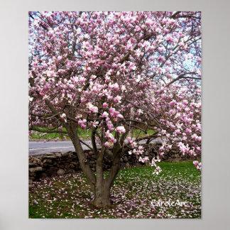 Stone Magnolias Art Poster