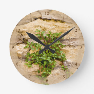 Stone Plants Round Clock