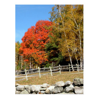Stone Wall in Autumn Postcard