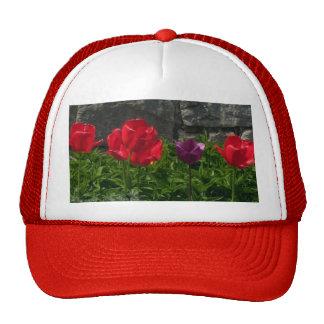 Stone Wall Tulips Cap