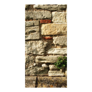 Stone Wall. With small plant. Custom Photo Card