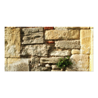 Stone Wall With small plant Photo Cards