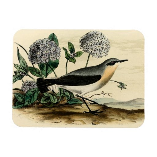 Stonechat Wren Rectangle Magnets