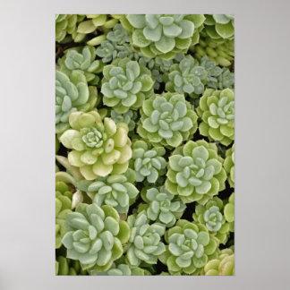 Stonecrop plant pattern print