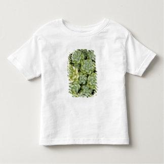 Stonecrop plant pattern toddler T-Shirt