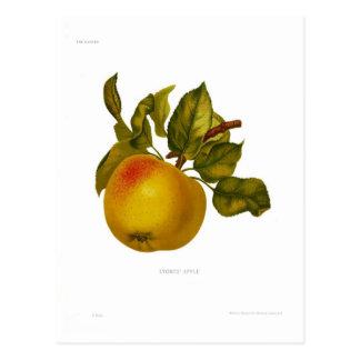 Stones' Apple Postcard