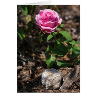 Stones | Desert Rose 148 Card