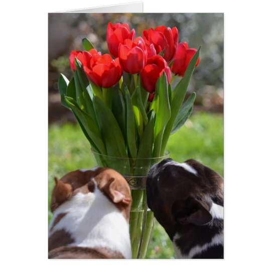 Stop and Smell the Tulips Card