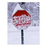 Stop Snowing! Postcard