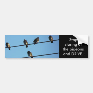 Stop Staring at the Pigeons Bumper Sticker