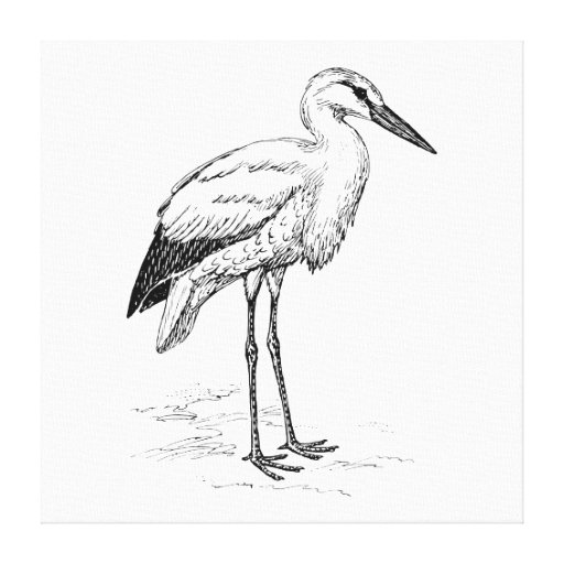 Stork Bird Black and White Cartoon Stretched Canvas Prints