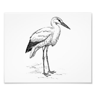 Stork Bird Black and White Cartoon Photograph