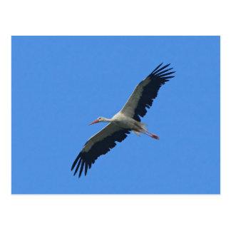 Stork in flight postcard