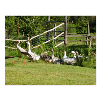 Stork leading the geese parade Greeting card