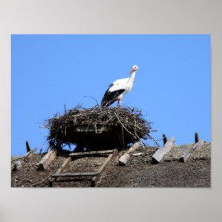 Stork on nest poster