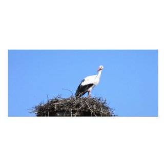 Stork on nest rack card design