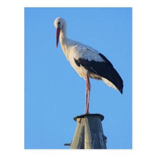 Stork on pole postcard