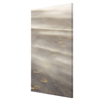 storm blowing shifting sand over boot prints 2