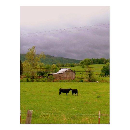 Stormy Day Postcard