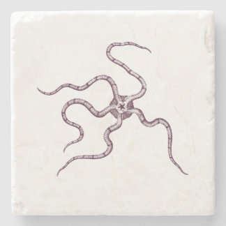 Strange Sea Creatures - Ophiura o. serpent star Stone Coaster