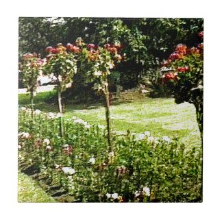 Stratford-upon-Avon Garden Rose snap-29602 jGibney Small Square Tile