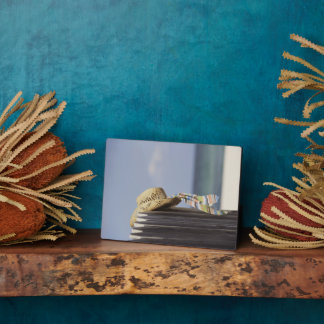 Straw Hat Hanging On Fence At Beach Plaque