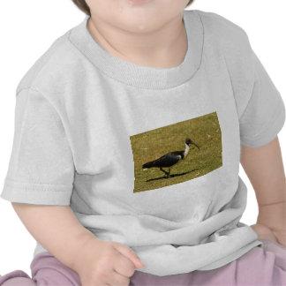 Straw-necked Ibis T-shirts