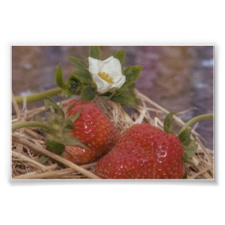 strawberries and strawberry more flower poster