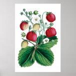 STRAWBERRIES botanical print