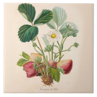 Strawberries Ceramic Tile Kitchen Accent