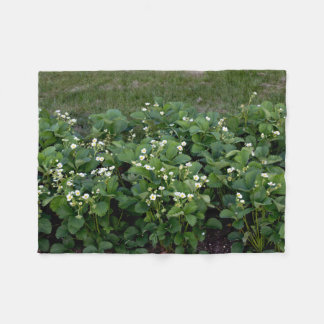 Strawberries flowering | fleece blanket