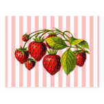 Strawberries on Pink and White Stripes