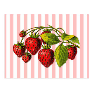 Strawberries on Pink and White Stripes Postcard