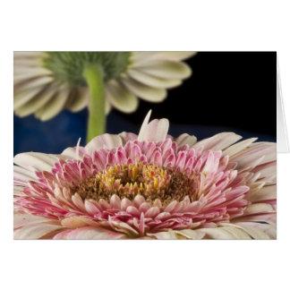 Strawberry Gerber Flower - Blank Card Greeting Card