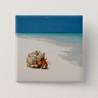 Strawberry Hermit Crab | Coenobita Perlatus 15 Cm Square Badge