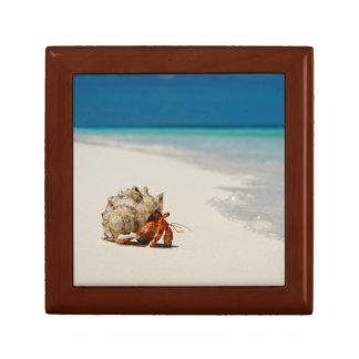 Strawberry Hermit Crab   Coenobita Perlatus Gift Box