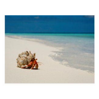 Strawberry Hermit Crab | Coenobita Perlatus Postcard