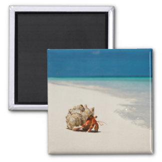 Strawberry Hermit Crab | Coenobita Perlatus Square Magnet