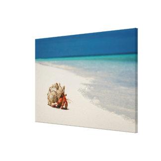 Strawberry Hermit Crab | Coenobita Perlatus Stretched Canvas Print