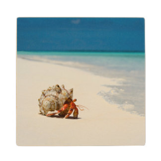 Strawberry Hermit Crab | Coenobita Perlatus Wood Coaster