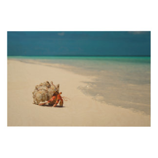 Strawberry Hermit Crab | Coenobita Perlatus Wood Prints