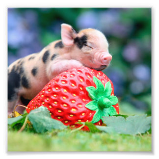strawberry pig photo print