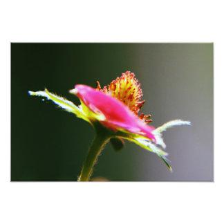 """Strawberry plant"" 19"" x 13"" Poster print Photo Art"